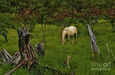 Photograph - At Pasture by Craig Wood