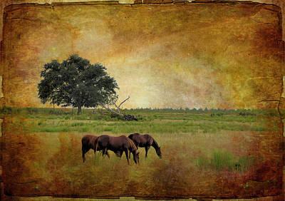 Photograph - At Pasture by Jan Amiss Photography