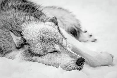 Photograph - At Peace In The Snow Bw by Athena Mckinzie