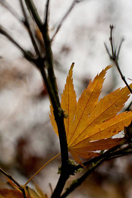 Colorful Leaves Photograph - At Rest by Mike Reid