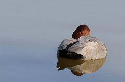 Photograph - At Rest by Richard Patmore