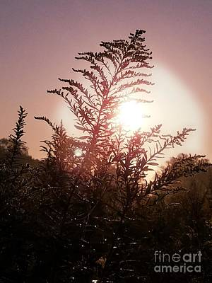 Photograph - At Sunrise In September by Maria Urso