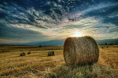 Photograph - At Sunset In The Field by Plamen Petkov