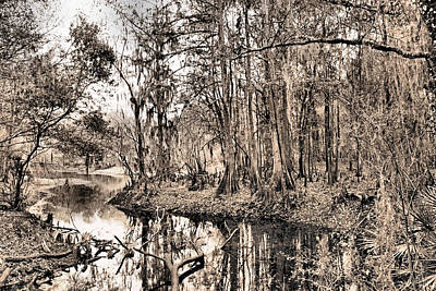 Photograph - At Swamps Edge by Kristin Elmquist
