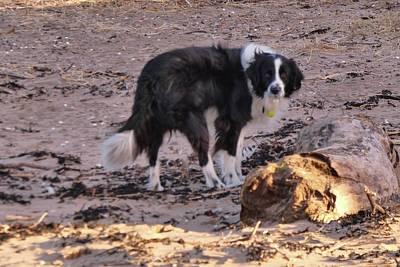 Photograph - At The Beach by Nik Watt