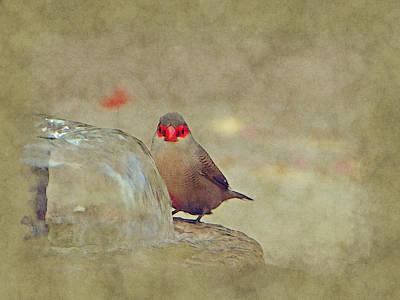 Photograph - At The Bird Bath by Lori Seaman