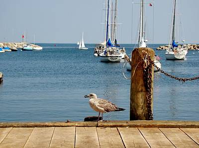 Photograph - At The Dock by Yvonne Breen