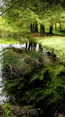 Photograph - At The Edge Of The Forest Pond. by Elena Perelman
