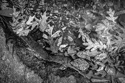Photograph - At The Edge Of The Water In Black And White by Debra and Dave Vanderlaan