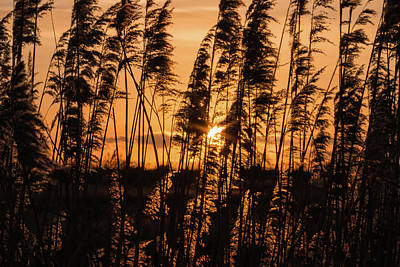 Photograph - At The End Of The Day.. by Wendy Cooper