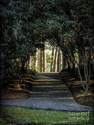 Photograph - At The End Of The Path by Ken Frischkorn