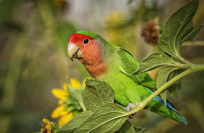 Lovebird Photograph - At The End Of The Rainbow  by Saija  Lehtonen