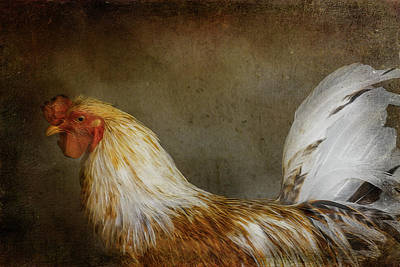 Poultry Digital Art - At The Farm by Terry Davis