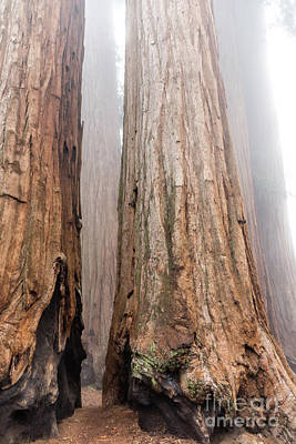 Photograph - At The Foot Of The Giants by Peggy Hughes