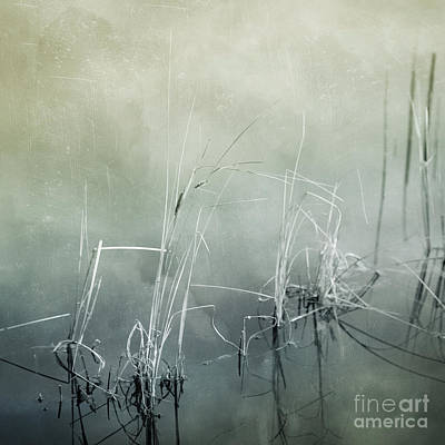 Photograph - At The Lake 3 by Priska Wettstein