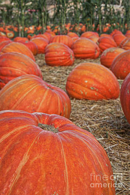 Pumpkin Patch Photograph - At The Pumpkin Patch by Ana V Ramirez