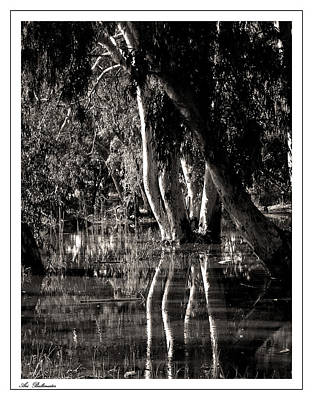 Art Print featuring the photograph At The Swamp by Arik Baltinester