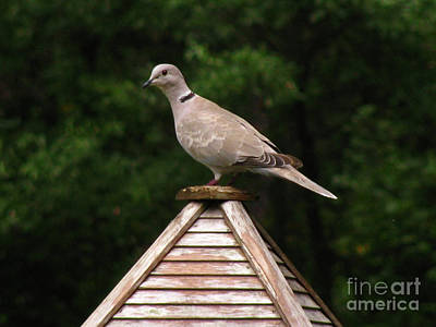 Photograph - At The Top Of The Bird Feeder by Donna Brown