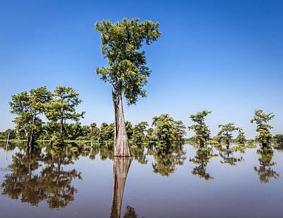 Photograph - Atchafalaya Cypress Tree by Gregory Daley  PPSA