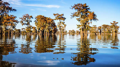 Photograph - Atchafalaya Swamp 2 Louisiana by Lawrence S Richardson Jr