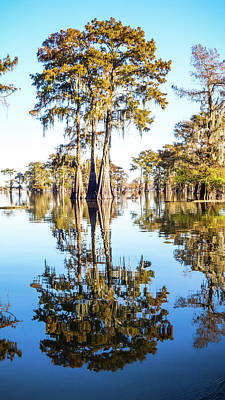 Photograph - Atchafalaya Swamp 4 Louisiana by Lawrence S Richardson Jr
