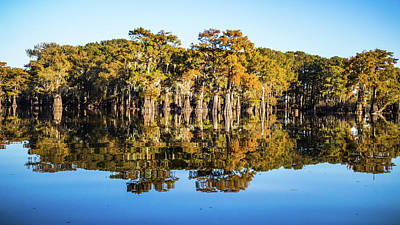 Photograph - Atchafalaya Swamp 5 Louisiana by Lawrence S Richardson Jr