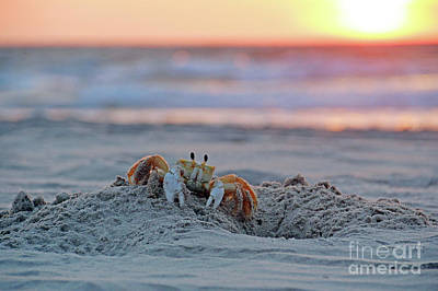 Photograph - Atlantic Ghost Crab At Sunrise 2612 by Jack Schultz