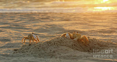 Photograph - Atlantic Ghost Crabs At Sunrise 2661 by Jack Schultz
