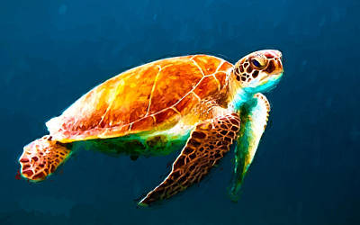 Atlantic Green Sea Turtle Art Print