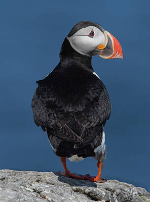 Photograph - Atlantic Puffin - 8789,s by Wally Hampton