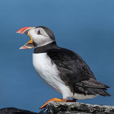 Photograph - Atlantic Puffin - 8865,s by Wally Hampton