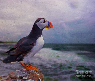 Waterfowl Painting - Atlantic Puffin by Jim  Hatch