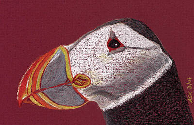 Puffin Drawing - Atlantic Puffin Profile by Anne Katzeff