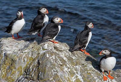 Photograph - Atlantic Puffins - 0526,s by Wally Hampton