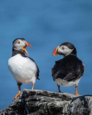 Photograph - Atlantic Puffins - 8664,s by Wally Hampton