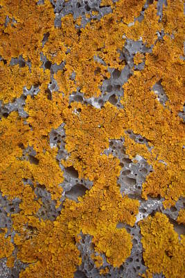 Photograph - Atmosphere - Lichen On Volcanic Stone by Robert Schaelike