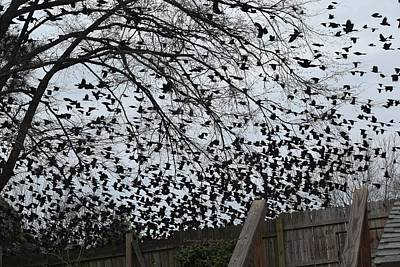 Wall Art - Photograph - Invasion Of The Blackbirds by Carolyn Hebert