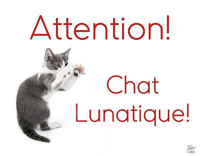 Photograph - Attention Chat Lunatique by Endre Balogh