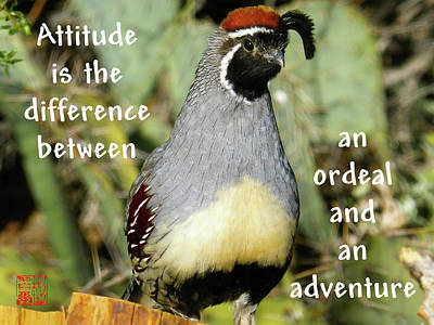 Photograph - Attitude by Bill Searle