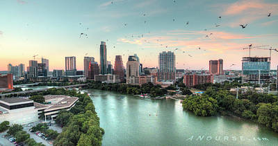 Photograph - Atx Bats by Andrew Nourse