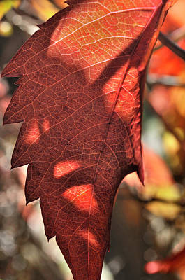 Photograph - Auburn Autumn by Ron Cline