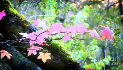 Photograph - Auburn Maple Leaves by Gus McCrea