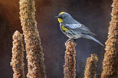 Warbler Digital Art - Audubon's Warbler On Mullein by R christopher Vest