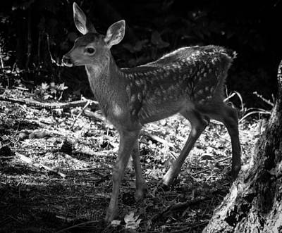 Photograph - Bambi - Black And White by Marilyn Wilson