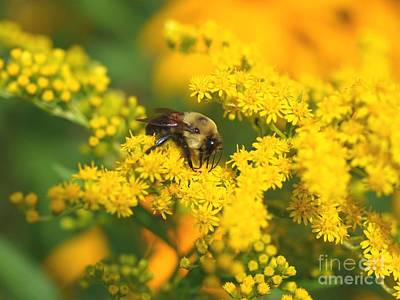 Art Print featuring the photograph August Bee by Susan  Dimitrakopoulos