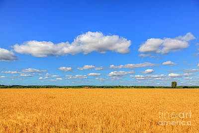 Royalty-Free and Rights-Managed Images - August countryside 6 by Veikko Suikkanen