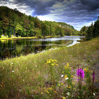 Art Print featuring the photograph August Flowers On The Pond by David Patterson