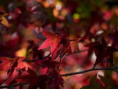 Photograph - August Leaves by Derek Dean