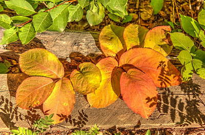Photograph - August Leaves by Jim Sauchyn
