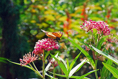 Photograph - August Monarch by Janis Nussbaum Senungetuk